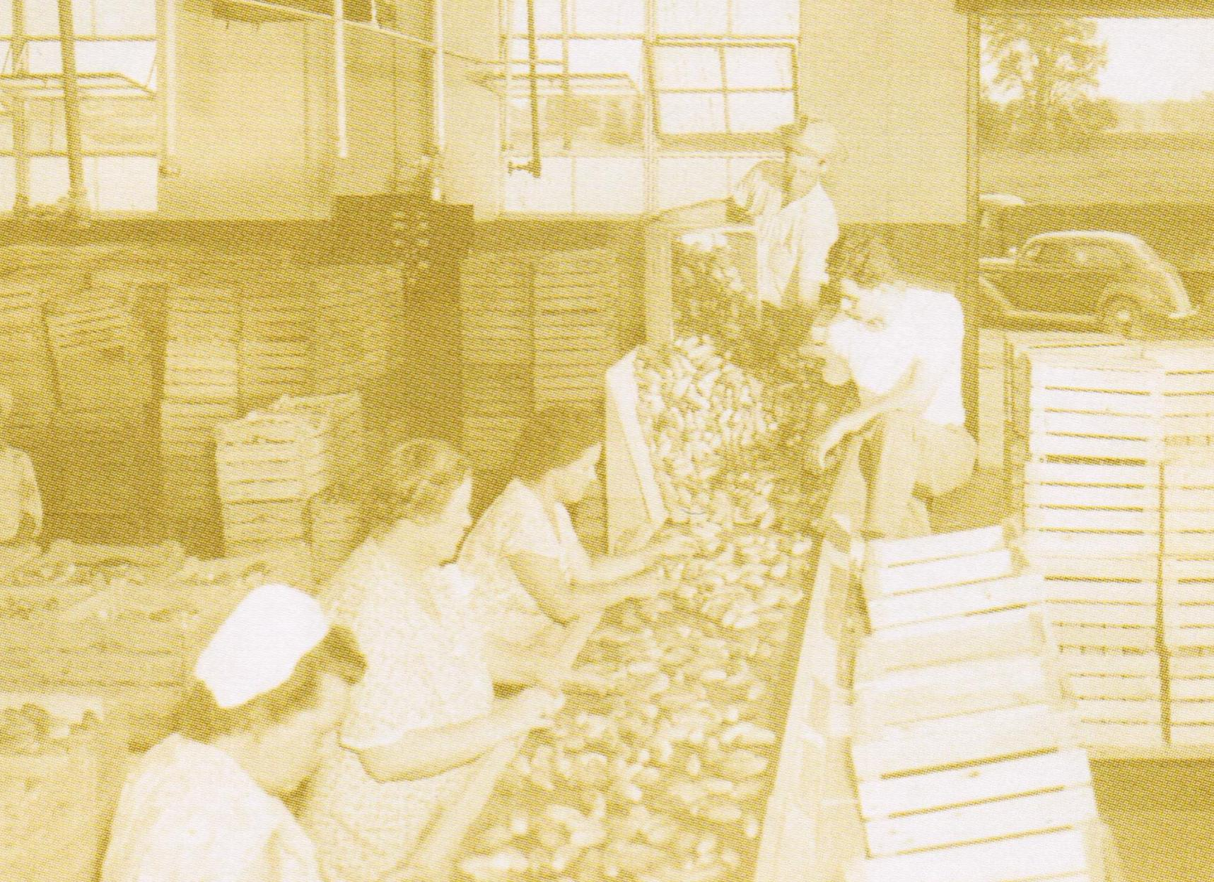 Making Pickles in 1937